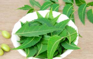 Neem extract may help treat pancreatic cancer: study