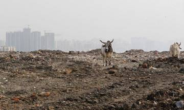 Solid waste from Ghazipur site to help make national highway