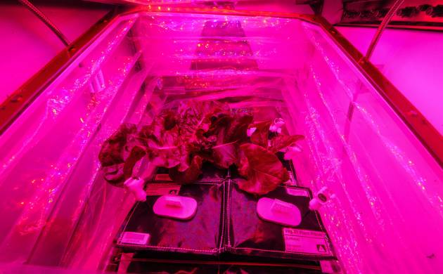International Space Station plants Lettuce in space using Veg-03 experiment
