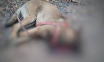 Chhattisgarh: CRPF's sniffer dog loses life in IED blast; handler injured