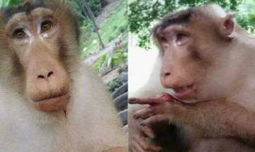 Watch: No more Humanity left in India, group of people hurt innocent monkey by showing greed of food