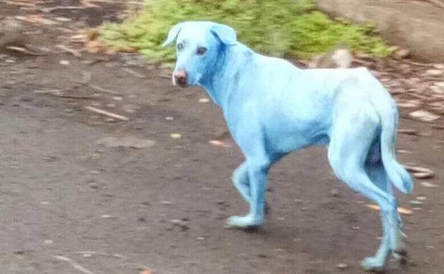 Mumbai: Dogs are turning blue near Taloja Industrial Estate, here is why!