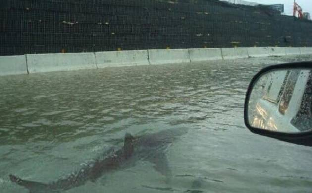 Hurricane Harvey hoax: Viral photo of shark swimming in Houston flood isn't real
