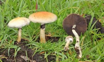 Magic mushrooms may help overcome depression, claims study