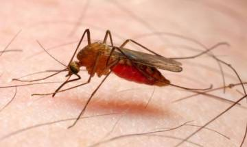 India accounts for 6 percent of global malaria cases, says WHO report