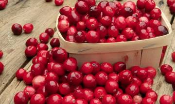 Cranberries, water, lemon to your daily diet may help reduce harmful effects of deadly smog
