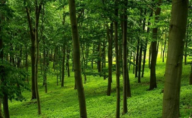 Odisha: Timber smugglers attack forest officials in Ganjam; 20 injured (Representative Image)