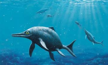 150 million-year-old fossilized remains of sea reptile discovered in Antarctica: Scientists
