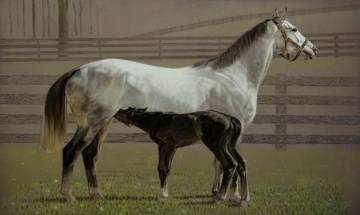 Equine movement banned in W Delhi over glanders epidemic fears