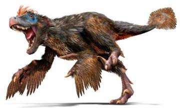 Duck-sized dinosaur 'Caihong juji' with big chest discovered in China, See Pics