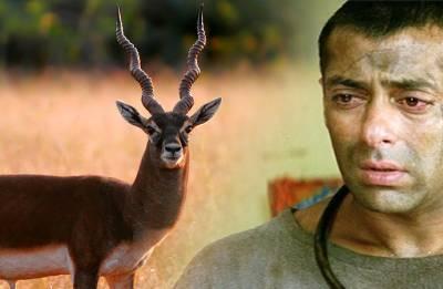 Blackbuck turns 'Tiger' into jailbird