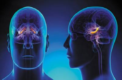 Older adults grow just as many new brain cells as young people!