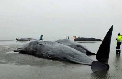 'If you have 80 plastic bags in your stomach, you die', Whale found dead in Thailand after swallowing 80 plastic bags