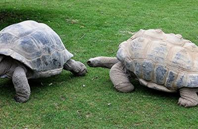 Seychelles gifts two giant tortoise to India