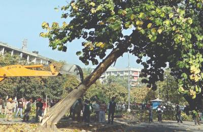 NGT stays felling of trees in Delhi till July 19; issues notice to Centre, CPCB