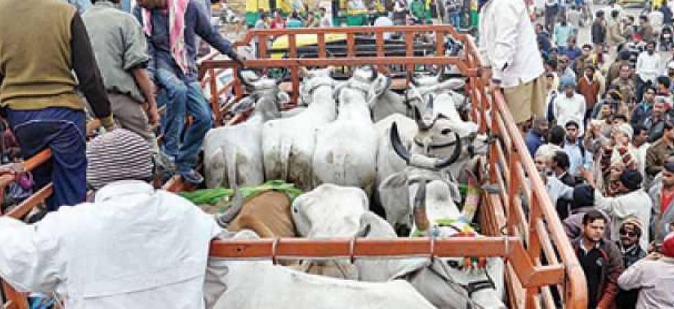 Cow vigilantism unacceptable, should not be linked to religion: Supreme Court