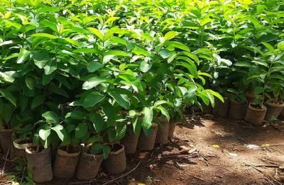 Van Mahotsav 2018 Week: Delhi Zoo to plant 50,000 saplings