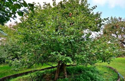 Newton's apple tree may soon take 'root' to inspire scientists in India