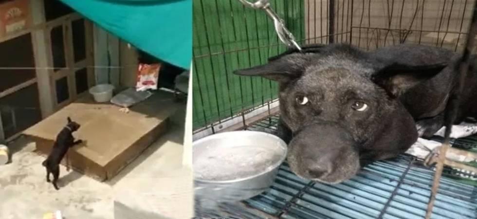 Burari Deaths Mystery: Bhatia family's pet dog Tommy dies of cardiac arrest (File Photo)