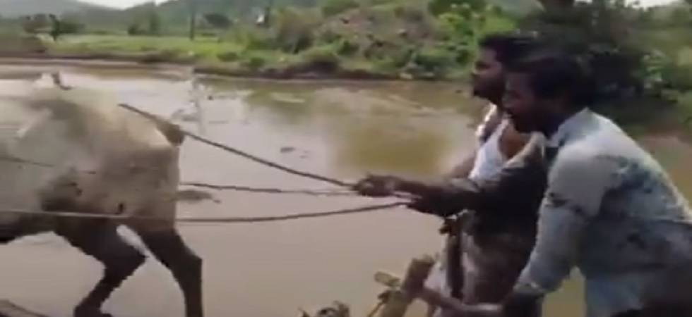Telangana farmers take the 'Kiki Challenge' with no car (Twitter)