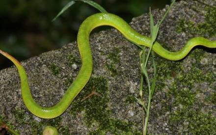 Nag Panchami 2018: Visit the major snake parks in India