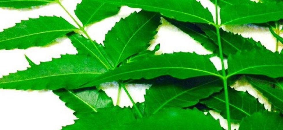 Grow neem trees for good health (Photo:Twitter)
