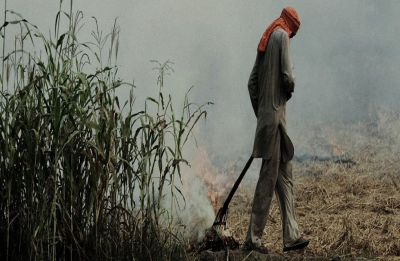 Punjab govt to appoint nodal officers to check stubble burning