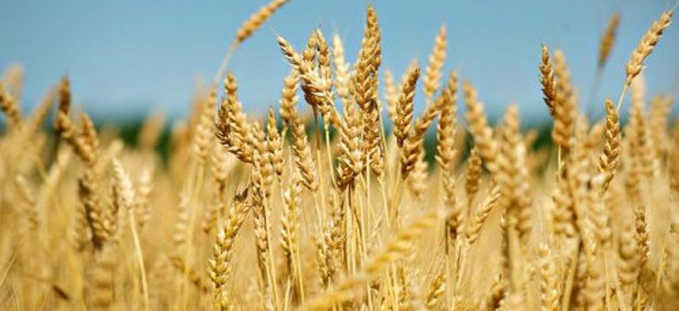 In a bid to woo farmers, Centre hikes MSP of wheat