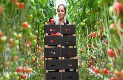 Tomatoes are the ultimate heart food   Find out why