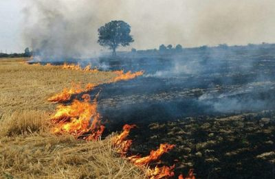 Haryana: 12 farmers fined for burning crop residue in Hisar