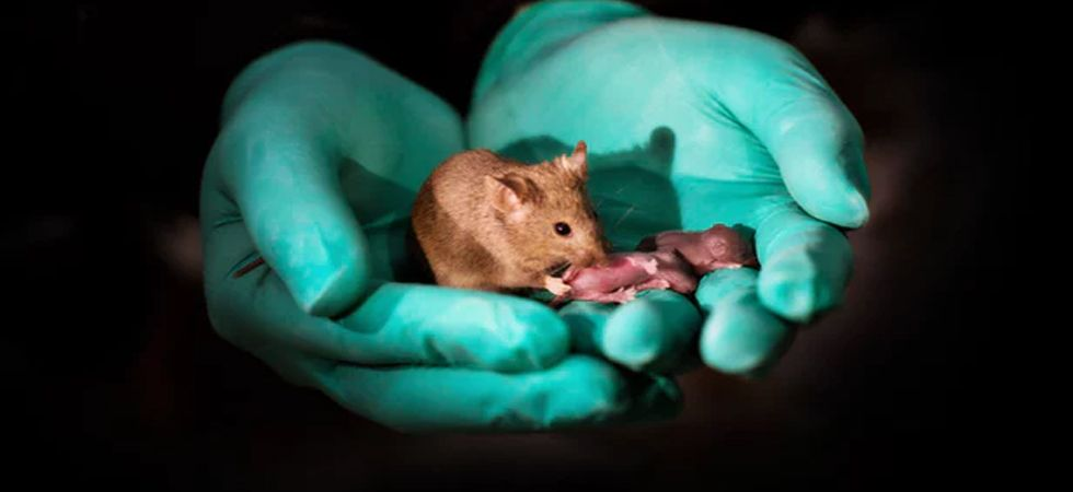 First mammal with two moms born using gene-editing (Photo: Twitter)