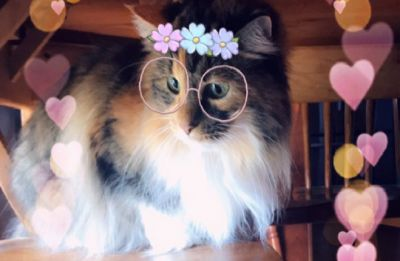 Move aside Dog filters! These new Snapchat Cat filters are just aww..dorable!