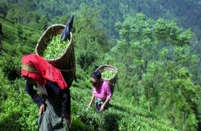 Sikkim: '100% organic state' gets F&O award for best policies