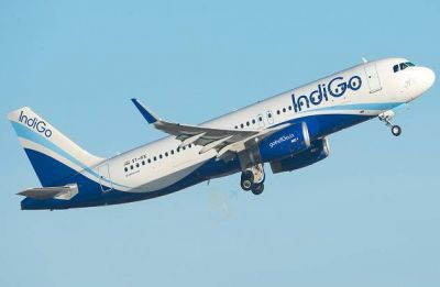 IndiGo's A320 neo plane turns back due to 'bird strike' on Friday: Airline