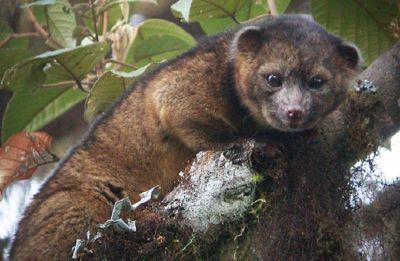 Humans driving mammal species decline globally: Study