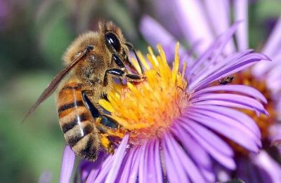 Bees can count with just four brain cells: Study