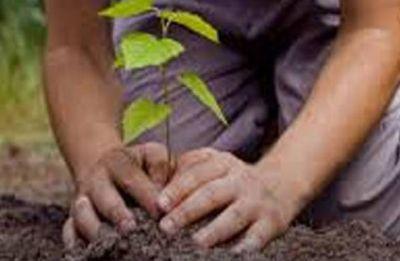 India, China leading global greening effort: NASA study