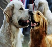 Dogs have unique personalities shaped by owners: Study