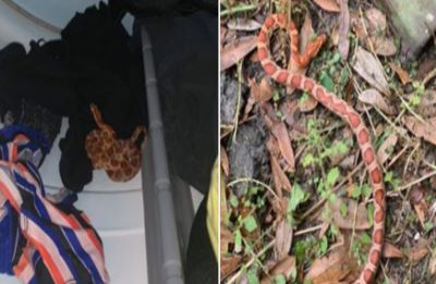Florida woman finds snake inside dryer, video of her running away goes viral