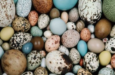 Scientists discover world's oldest eggs to shed new light on dinosaur evolution