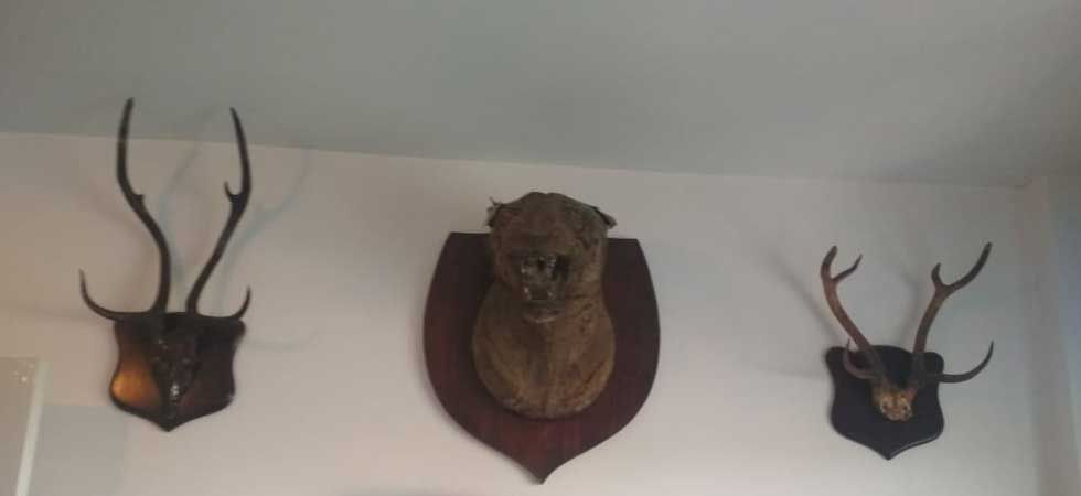 News Nation accessed exclusive photos of wildlife trophies recovered from Ashwani Sharma's Bhopal residence.