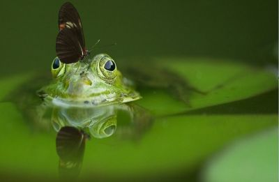 Life on Earth may have arisen in ponds, not oceans: Study