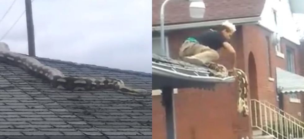 18-feet python slithers on garage roof in Detroit.