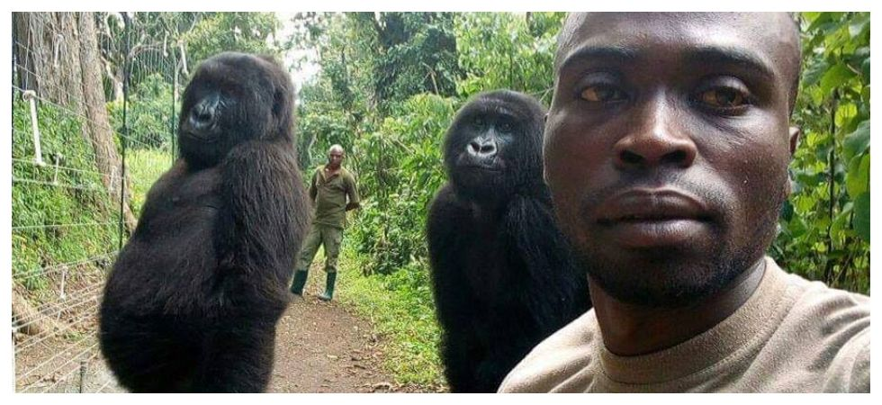 Selfie of gorillas with anti-poaching officers gain netizens' respect (Photo: Facebook/Ranger Mathieu Shamavu)