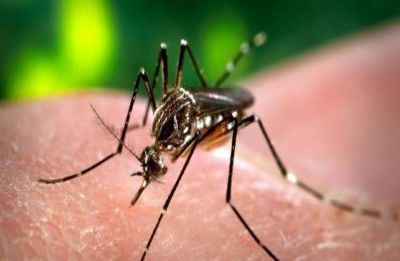 Indian Council of Medical Research launches 'MERA India' to eliminate malaria from India by 2030