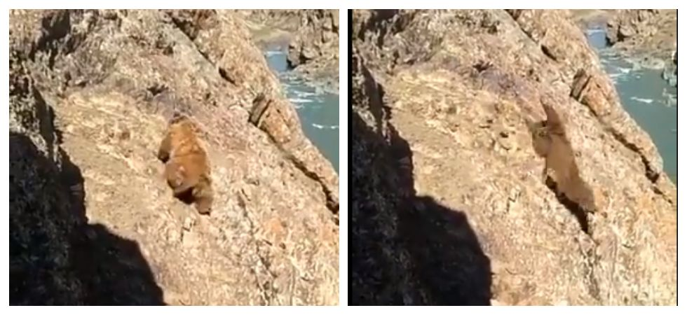 Bear falls off cliff after locals pelt it with stones (Photo: Twitter)
