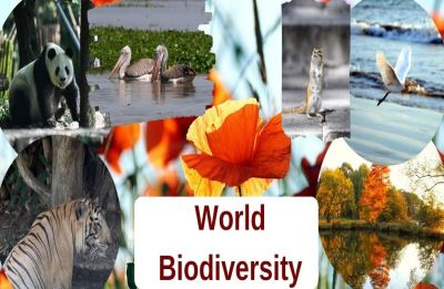 International Day for Biological Diversity 2019: What this year's theme,''Our Biodiversity, Our Food, Our Health'' mean
