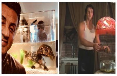 Sylvester Stallone kept the two turtles from 'Rocky', and they are now 44!