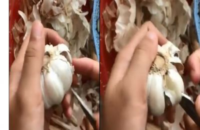 Watch Video: This garlic peeling hack takes Internet by storm, garners over 21.5 million views on Twitter
