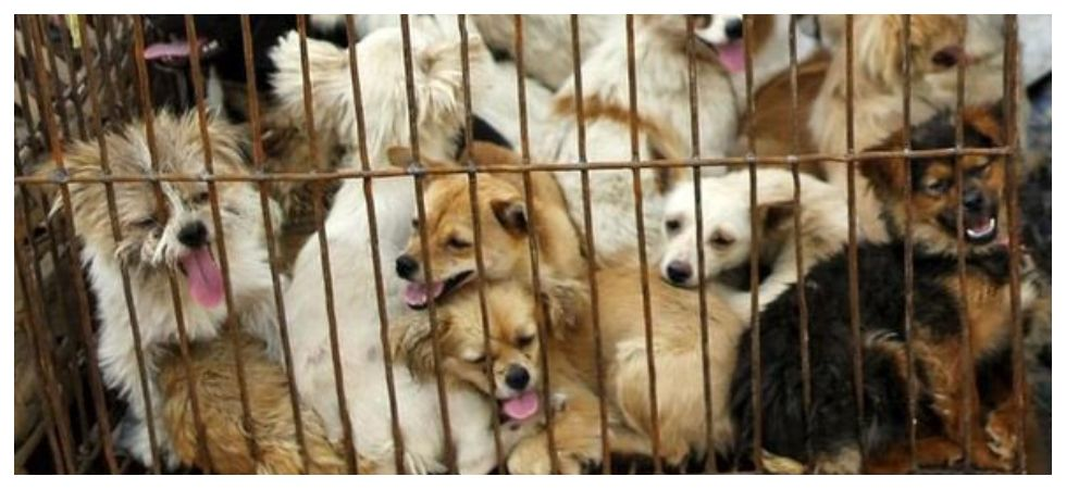 Millions petition to ban Yulin Dog Meat festival (Photo: Twitter)